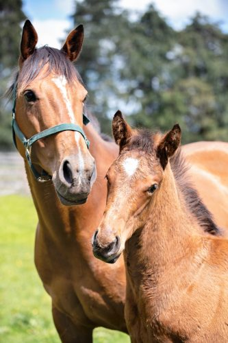Koru Thoroughbreds